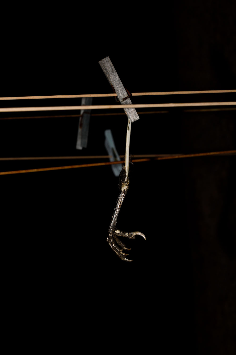 Melissa Spiccia | CONVERSATIONS WITH DEATH WASHING LINE MELISSA SPICCIA