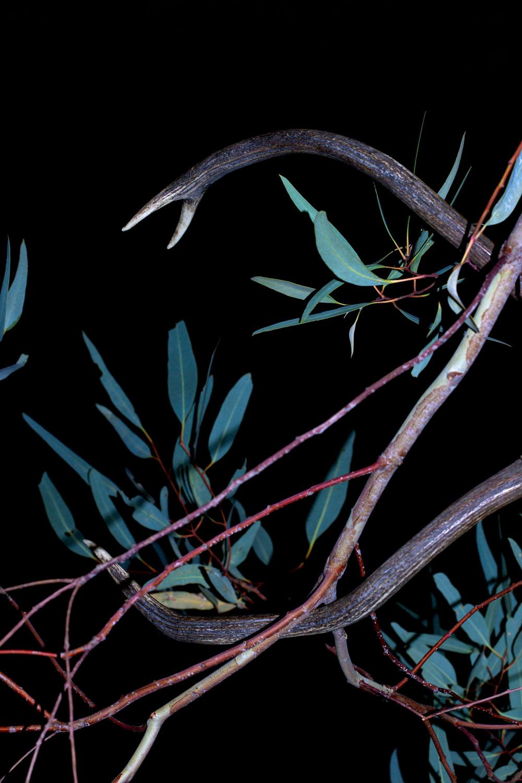 Melissa Spiccia | CONVERSATIONS WITH DEATH DEER ANTLERS MELISSA SPICCIA