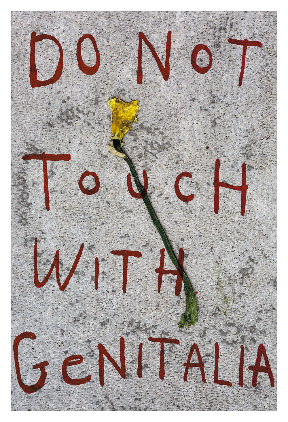 Melissa Spiccia | SEE FLOWERS IN HEL DO NOT TOUCH WITH GENITALIA DAFF MELISSA SPICCIA