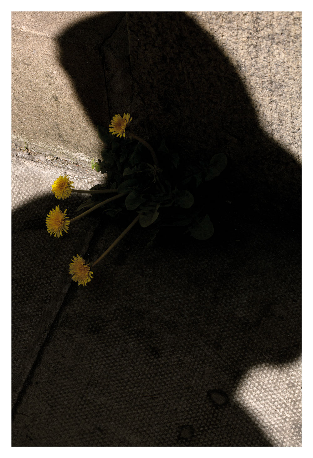 Melissa Spiccia   SEE FLOWERS IN HELL YOUR SHADOW MELISSA SPICCIA