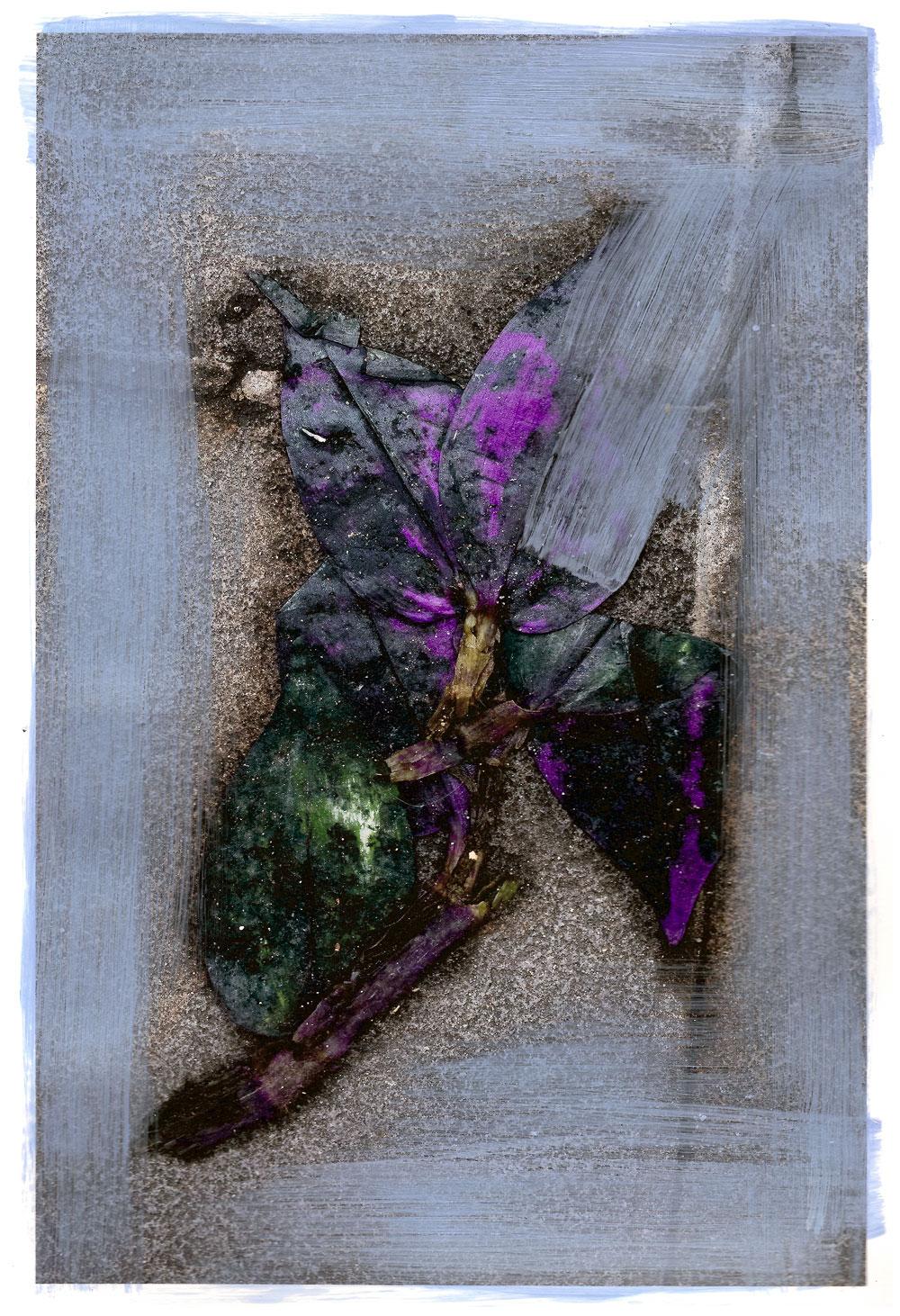 Melissa Spiccia | SEE FLOWERS IN HELL FALLEN PHOTOGRAPH MELISSA SPICCIA